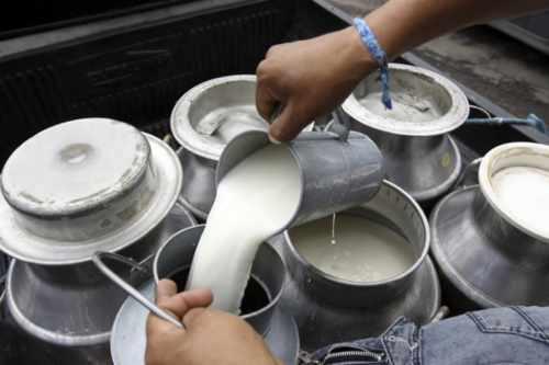 La producción de leche se redujo 10 mil litros por día